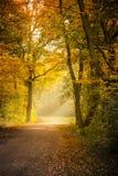 Jesienny drzewa eside ścieżka Fotografia Royalty Free