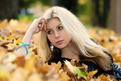 jesienny dywan fotografia royalty free