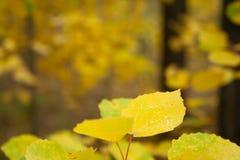 jesienny dzień opuszczać melancholicznego kolor żółty obraz royalty free