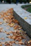 jesienny dzień opuszczać melancholicznego kolor żółty Zdjęcia Stock