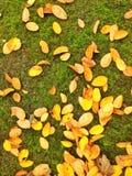 jesienny dzień opuszczać melancholicznego kolor żółty Zdjęcia Royalty Free