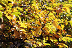 jesienny dzień opuszczać melancholicznego kolor żółty Zdjęcie Royalty Free