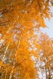 jesienny dzień opuszczać melancholicznego kolor żółty Fotografia Stock