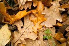 jesienny dzień opuszczać melancholicznego kolor żółty Obrazy Stock