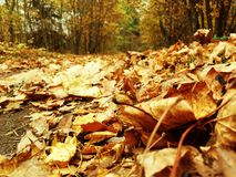 jesienny dzień opuszczać melancholicznego kolor żółty Obraz Stock