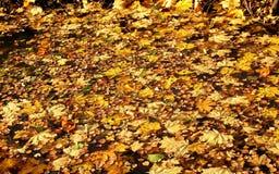 jesienny dzień opuszczać melancholicznego kolor żółty Fotografia Royalty Free