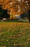 jesienny dzie? opuszcza? melancholicznego kolor ? zdjęcia stock