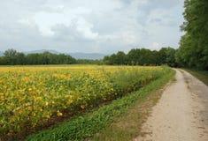 jesienny fasoli pola soya Zdjęcia Stock
