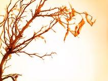 jesienny gałęziasty drzewo Zdjęcia Royalty Free