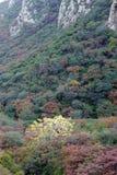 Jesienny halny las zdjęcia royalty free