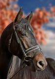 jesienny koński portret Zdjęcia Royalty Free
