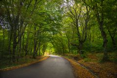 Jesienny krajobraz Kakheti region Zdjęcie Stock