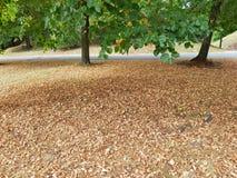Jesienny krajobraz, wysuszeni liście w parku, las obraz stock