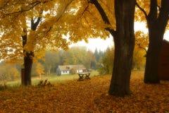 Jesienny krajobraz z drzewami Zdjęcie Royalty Free