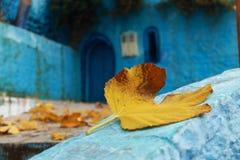 Jesienny krajobraz z suchym liściem w przedpolu Zdjęcie Royalty Free