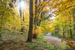 jesienny krajobrazu Zdjęcia Royalty Free