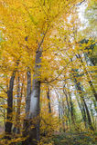 jesienny krajobrazu Zdjęcia Stock
