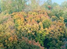 jesienny las Obrazy Stock