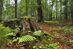 Jesienny las Zdjęcie Stock