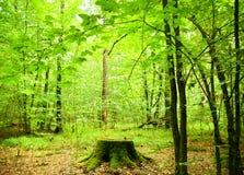 Jesienny las. fotografia stock