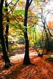 jesienny las Obrazy Royalty Free