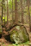 jesienny las Obraz Stock
