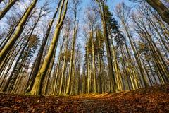 jesienny las Zdjęcia Royalty Free