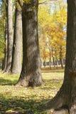 jesienny las Zdjęcie Royalty Free