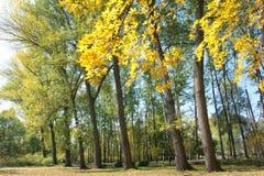 jesienny las Zdjęcia Stock