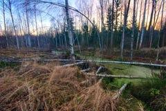 jesienny las Fotografia Stock