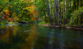Jesienny las z dziką rzeką Obrazy Stock