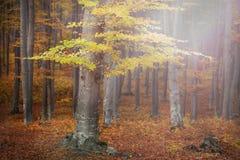 Jesienny lasowy środowisko Zdjęcia Royalty Free