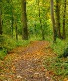 Jesienny lasu spacer obrazy royalty free