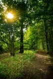 Jesienny lasu spacer fotografia stock