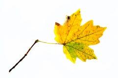 jesienny liść fotografia stock