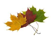 jesienny liść Zdjęcie Royalty Free