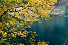 jesienny liść. Zdjęcie Royalty Free