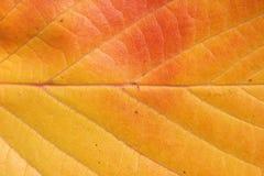 jesienny liść Zdjęcia Royalty Free
