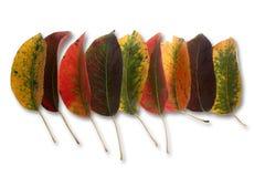 jesienny liść gromadzenia danych Obrazy Stock