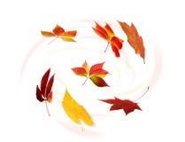 jesienny liść gromadzenia danych Obraz Royalty Free