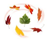jesienny liść gromadzenia danych Zdjęcie Stock