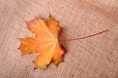 Jesienny liść klonowy na parciaku Obrazy Royalty Free