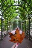 Jesienny liść klonowy w ręce zdjęcie stock