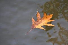 Jesienny liść w jeziorze Fotografia Royalty Free