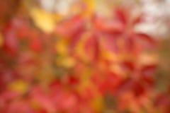 Jesienny naturalny bokeh Zdjęcie Stock
