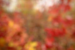 Jesienny naturalny bokeh Obraz Stock