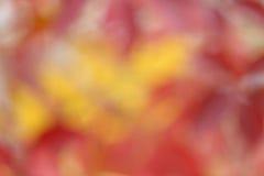 Jesienny naturalny bokeh Fotografia Stock
