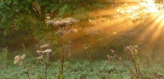 jesienny odczucie Fotografia Royalty Free