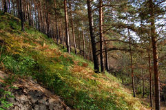 jesienny paprociowy las zdjęcie stock