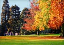 jesienny park Obraz Stock